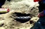 Des chercheurs argentins ont découvert des fossiles d'une baleine de 49 millions d'années