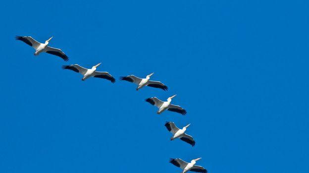 Le froid anormalement long a complètement chamboulé le parcours migratoire des oiseaux.