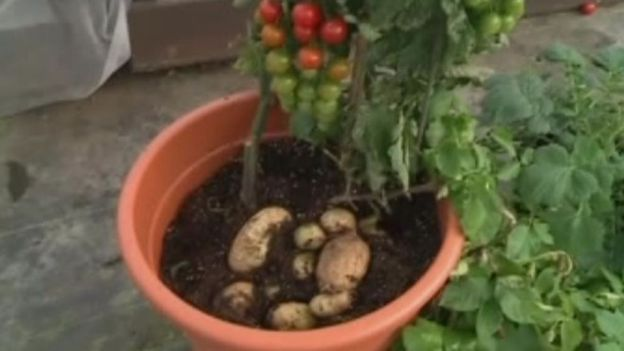 Quand planter tomates christoph for Comment planter les tomates cerises